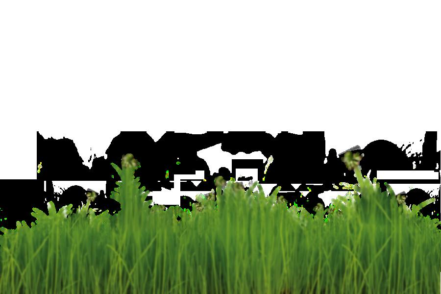 freiraum - die gartengestalter, Garten ideen
